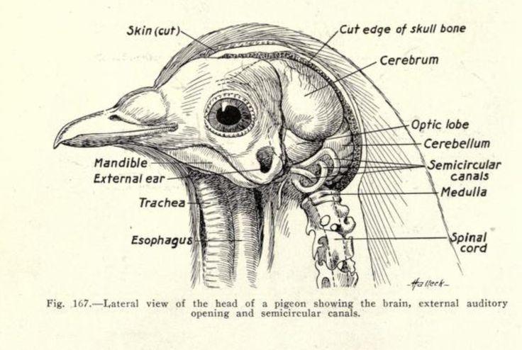 meet the bird brains