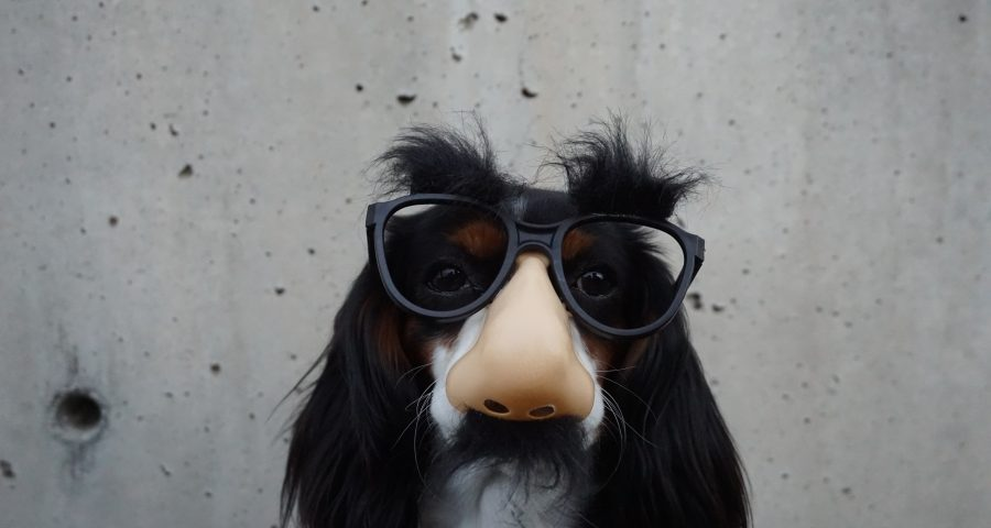 black and white dog with a disguise nose and glasses