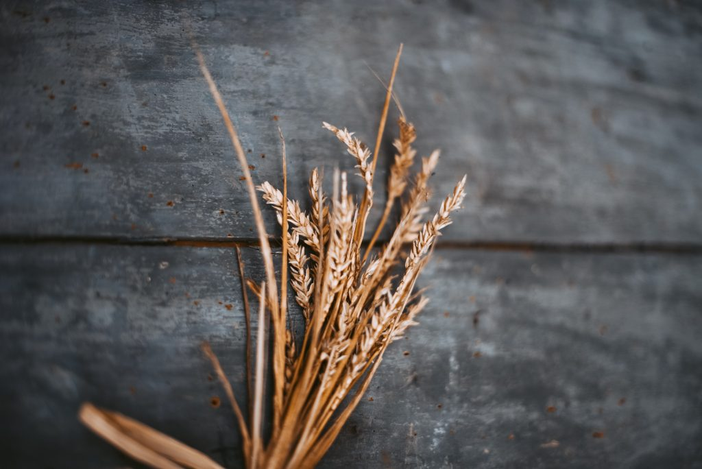 Dried wheat stalks against a wood background
