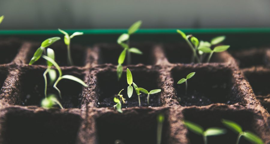 Growing plants in small soil pots