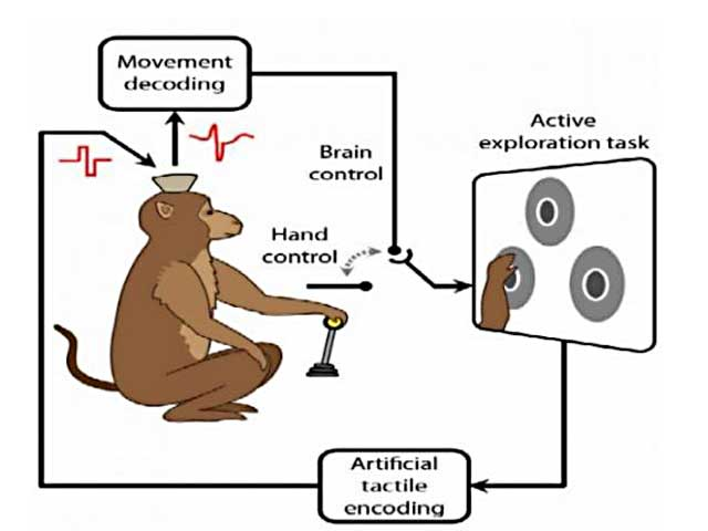 Scheme showing a monkey activating controller with its hand and its brain decoding the movement