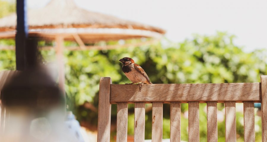 Bird on a garden chair