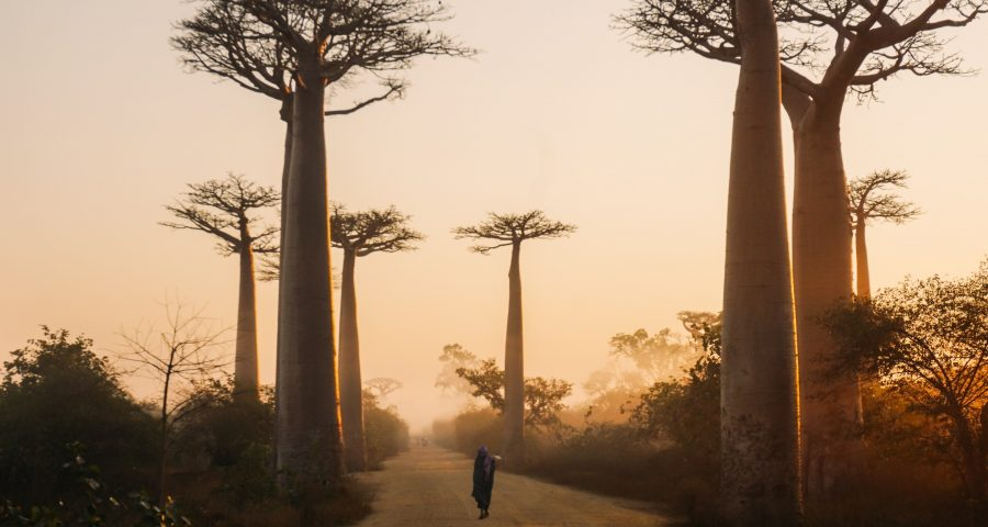African trees in the dusk