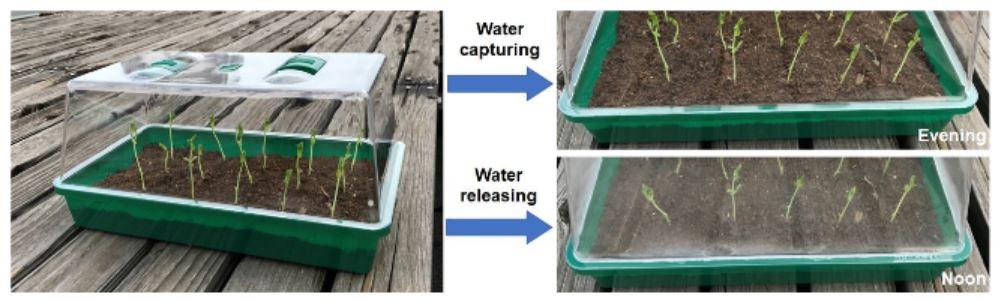 Plants growing in SMAG soil