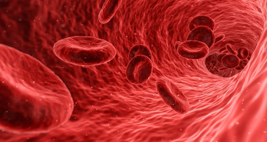 Blood cells in a vessel