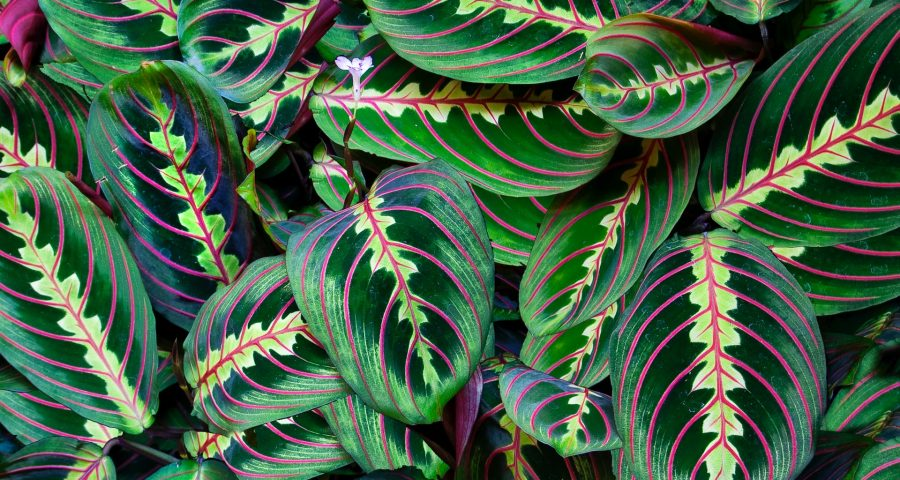 Green leaves with the same pattern