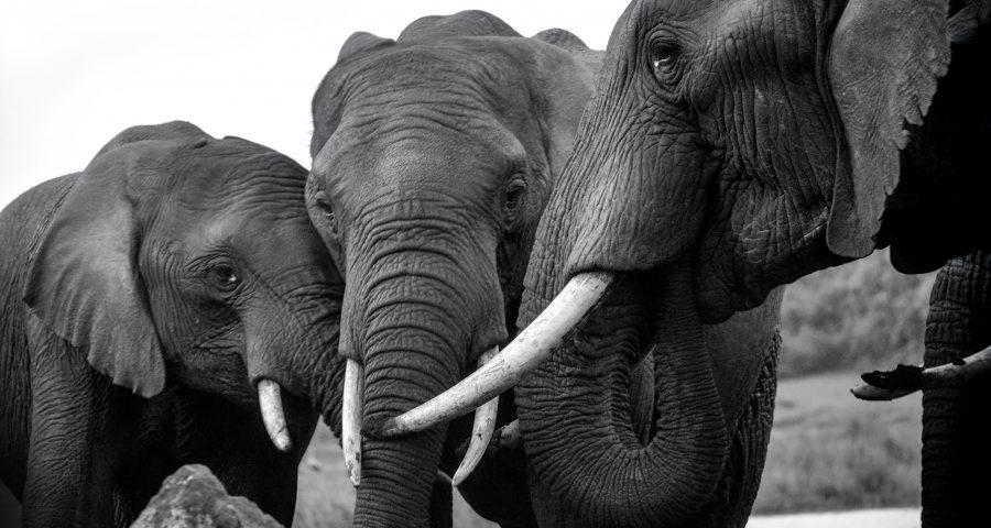 Photo of group of elephants
